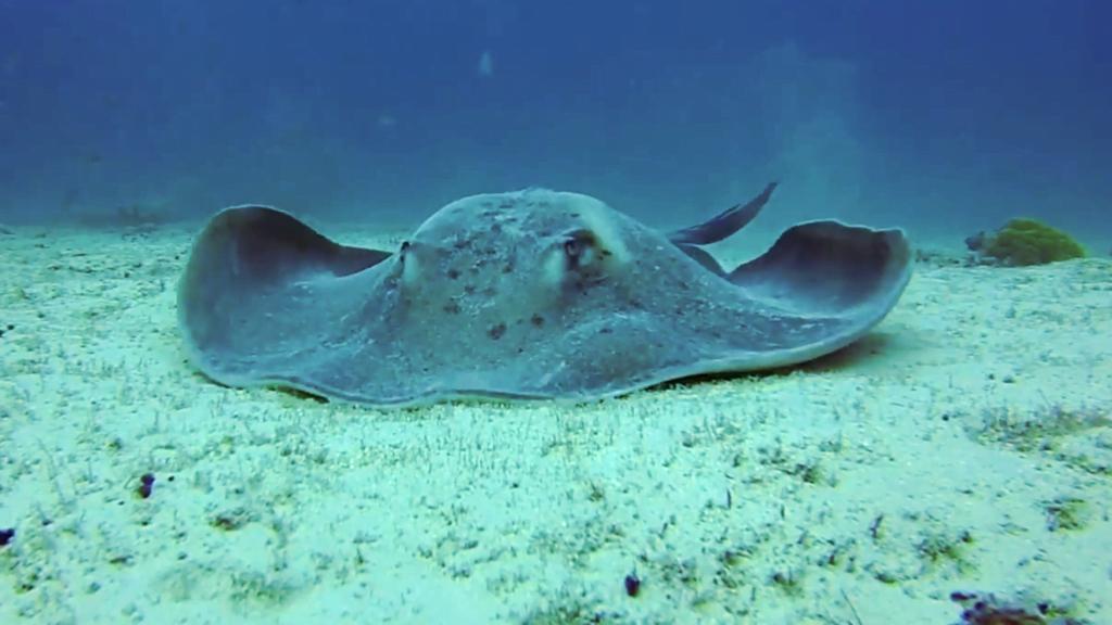 Diving in Boa Vista