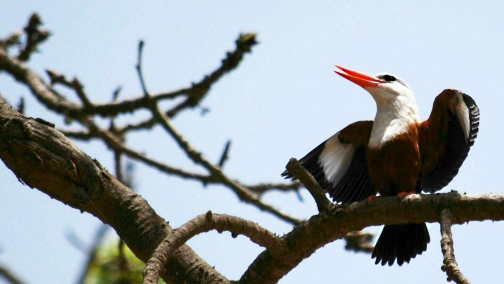 Bird Watching in Cabo Verde
